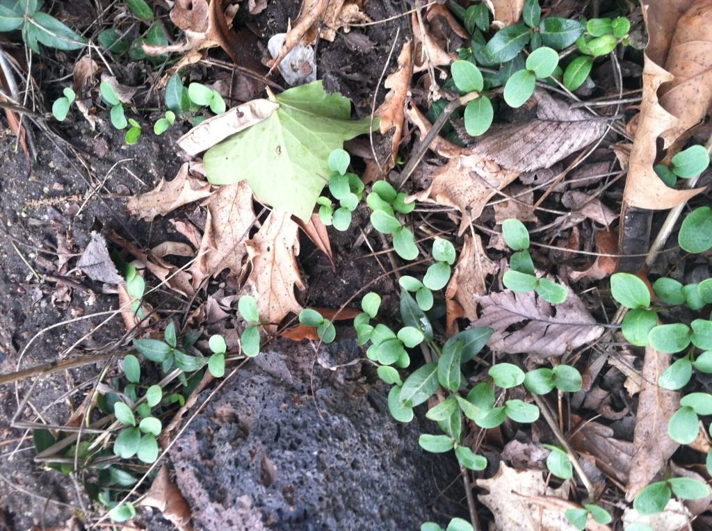 leavesdriedleaves