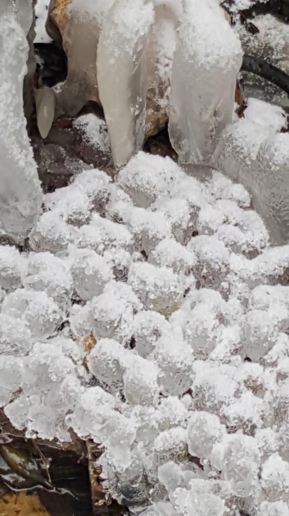 iceballsCROP